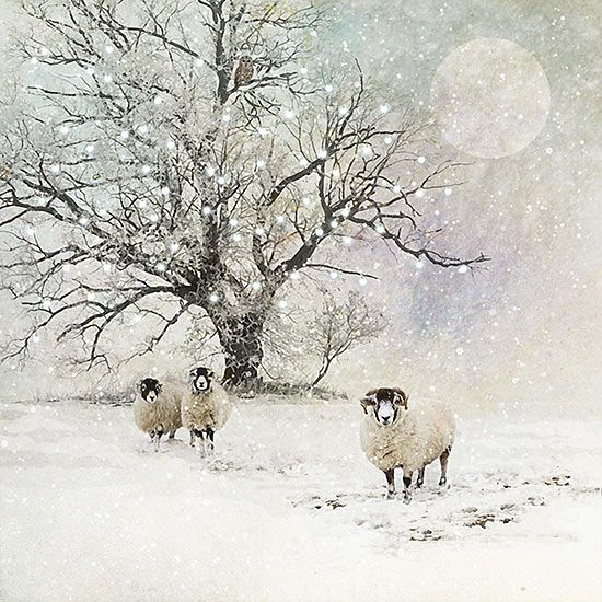 Sheep Snow Scene - christmas card design by Jane Crowther for Bug Art greeting cards.