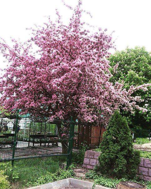 А вы видели как цветет яблоня? Ждем Ваши фото в директ) #russia #moscow #leocompany #dizain