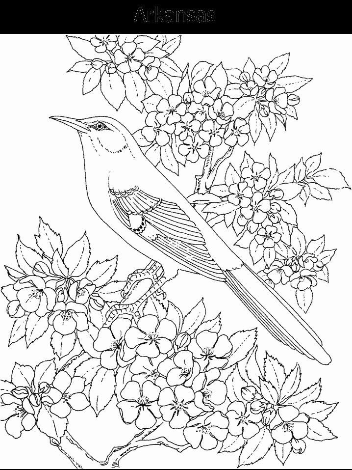 19 best Coloring Pages - State Birds \ Flowers images on Pinterest - best of coloring pages adults birds
