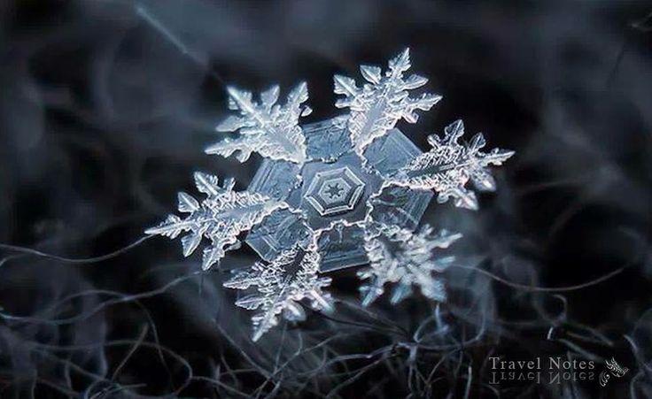 La neve e il suo magnifico silenzio. Non ce n'è un altro che valga il nome di silenzio, oltre quello della neve sul tetto e sulla terra. · Erri De Luca · Il peso della farfalla · 2009 ·