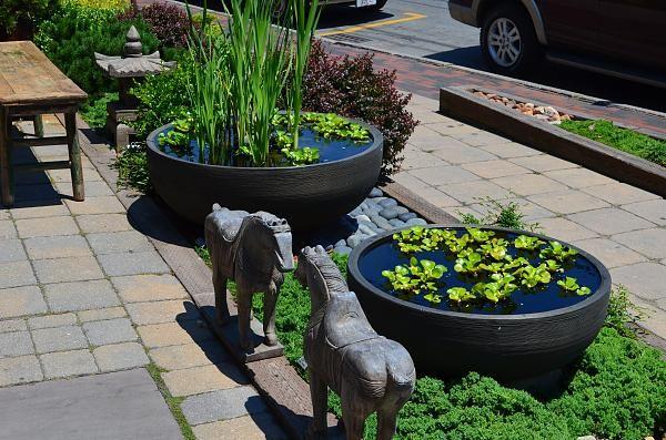 Container water garden water gardens pinterest container water gardens gardens and small - Small water gardens in containers ...