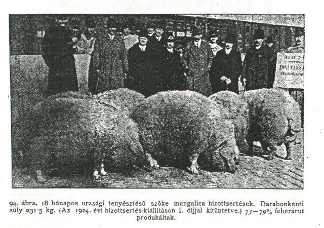 Ze worden ook wel Mangalitsvarkens genoemd, worden vooral in de Balkanlanden gefokt. Het Mangalica varkensras is in Hongarije ooit ontstaan toen een aantal Sumadia varkens werden geïmporteerd uit Servië en gekruist werden met Szaltonser en Bakonyer varkens. Het Bakonyer varken stamt rechtstreeks af van het wilde zwijn en werd gehouden om zijn vet.  Lees hier het gehele artikel. http://shortly.nl/Fr