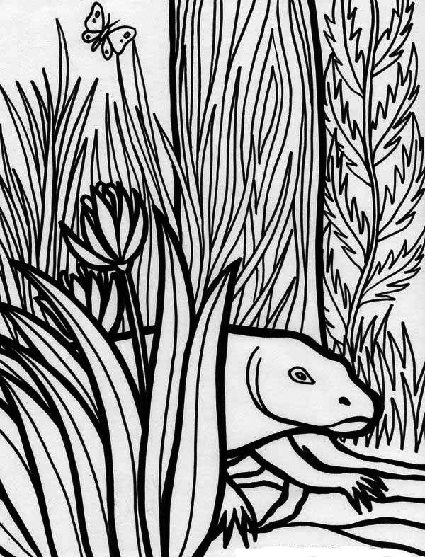 Komodo Dragon Rainforest Reptile Coloring Page - Download ...