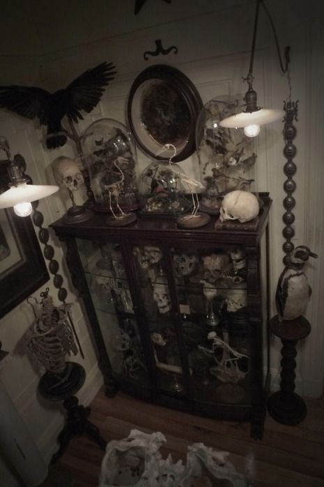 : Witch House, Oddities, Display Cabinets, Taxidermy, Liquor Cabinets, Display Cases, Cabinets Of Curiosities, Skull Art, Curio Cabinets