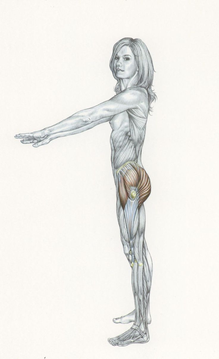 65 best Comparative Anatomy images on Pinterest   Animal anatomy ...