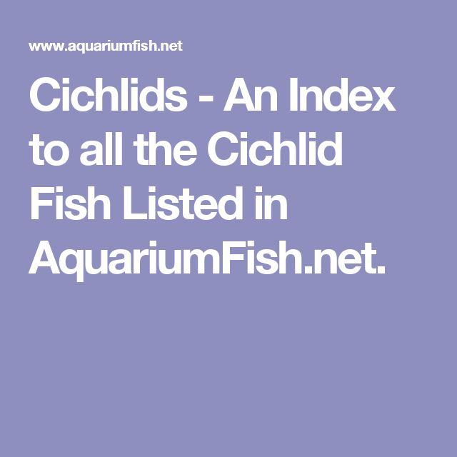 Cichlids - An Index to all the Cichlid Fish Listed in AquariumFish.net.
