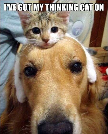 Awww I need one of thoseHats, Random Funny, Cat, Funny Dogs, Best Friends, So Cute, Funny Pictures, Pets, Funny Animal