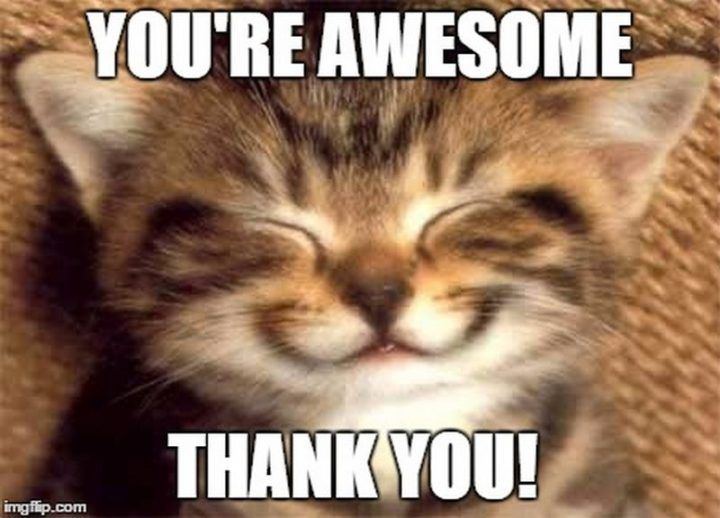 101 Funny Thank You Memes to Say Thanks for a Job Well Done in 2020 | Funny thank you, Funny thank you quotes, Thank you pictures