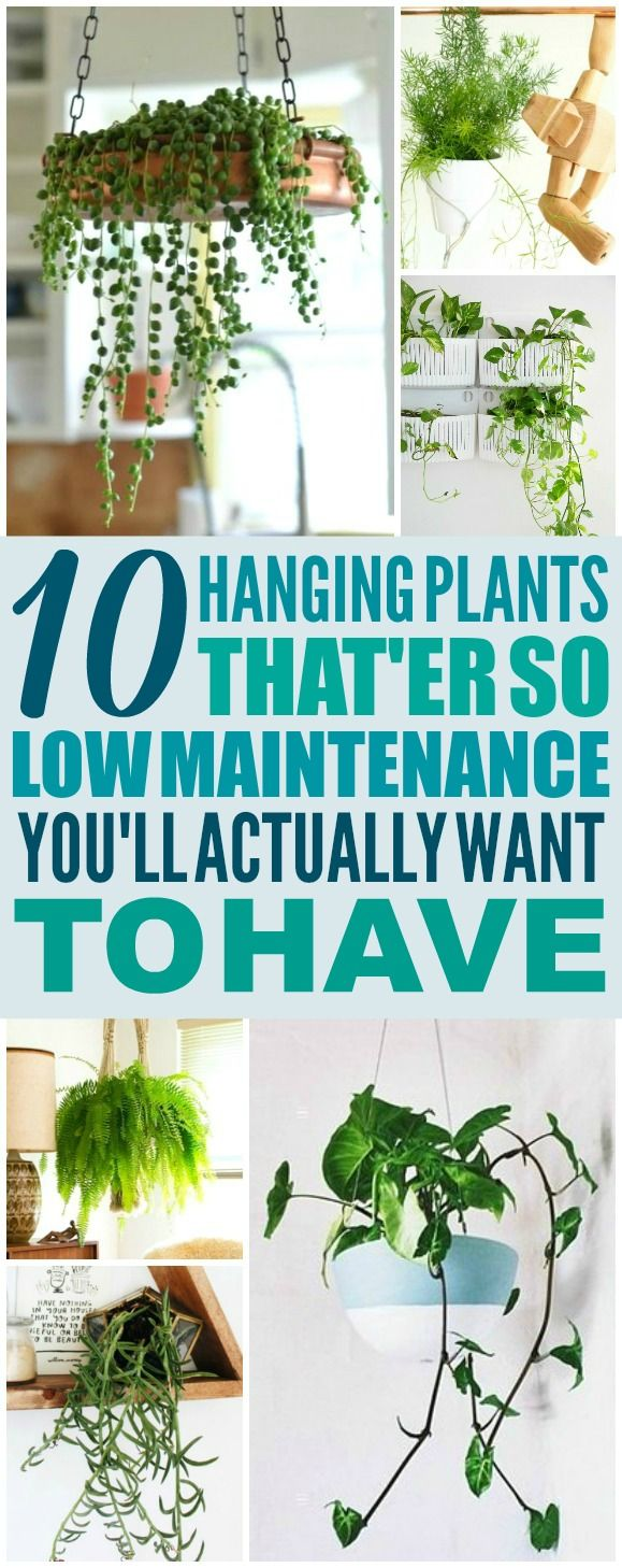 These 10 Low Maintenance Hanging Plants are THE BEST! I'm so glad I found these AWESOME ideas! Now I have a great way to decorate my home and not kill the plants! Definitely pinning!