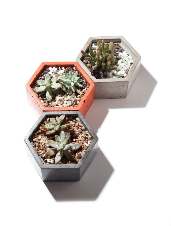 Our concrete vessels make the perfect planter for small succulents and cacti. They look great alone or nestled together in a group for stunning table centerpieces. The concrete helps to absorb moisture and keep your succulents and cati soil on the dry side, which they love! I have these all over the place in my own home on the dining room table, window sills, and desks. They are a bright, wonderful addition to any home. **This listing is for one concrete vessel. It does not include any…