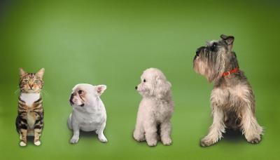 Remédio caseiro para queda de pelos em cães e gatos | eHow Brasil