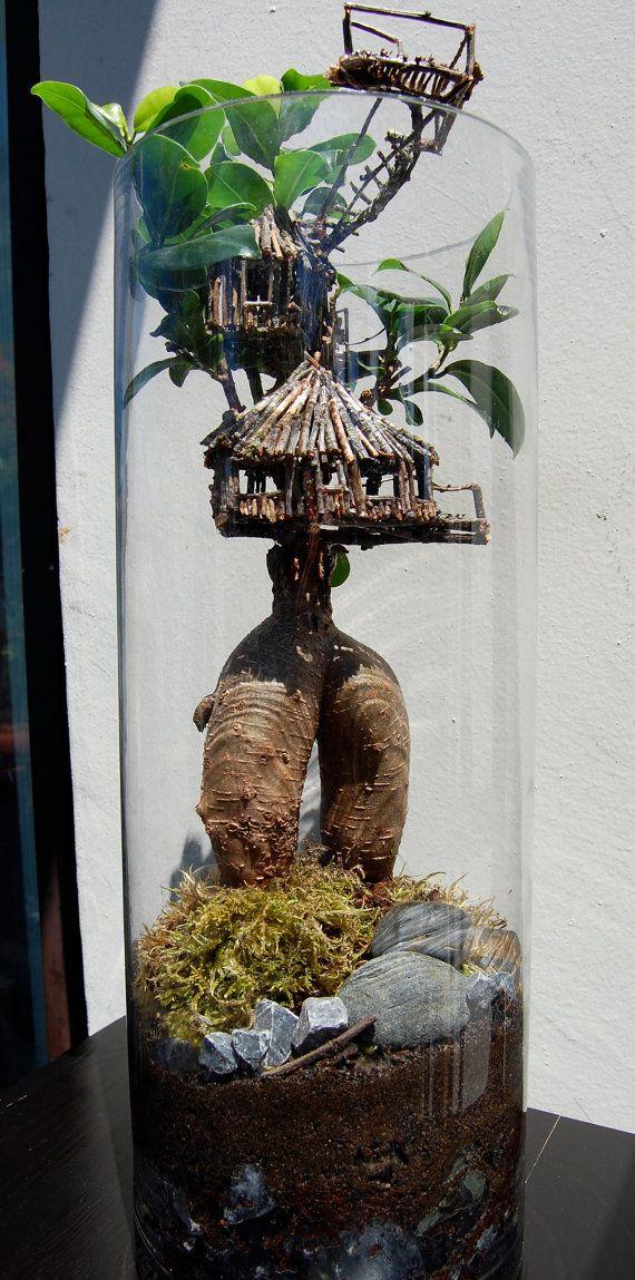 Tree house terrarium