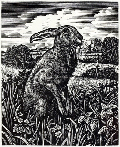 March Hare by Howard Phipps  Wood Engraving