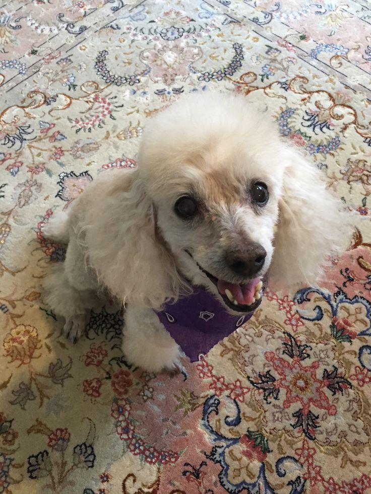 Nicki looking handsome after grooming!