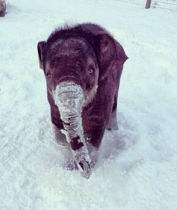 60 Beautiful Pictures of Animal in the Snow