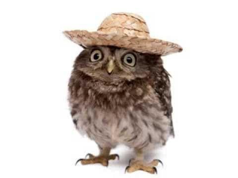 Owl Happy Birthday Song (It's funny!) (+playlist)