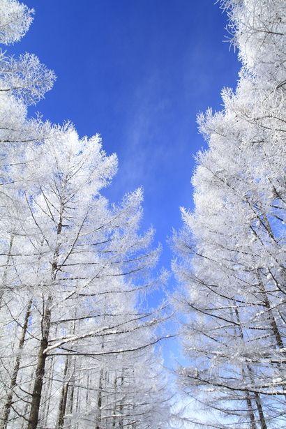 White  - Biei, Hokkaido, Japan