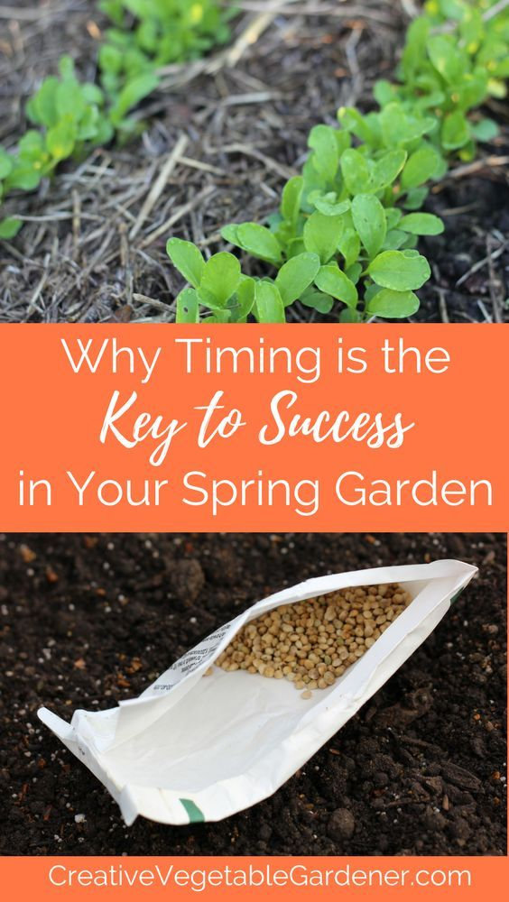 Planting vegetables at the wrong time can mean the difference between their success and utter failure. Timing is everything in spring!