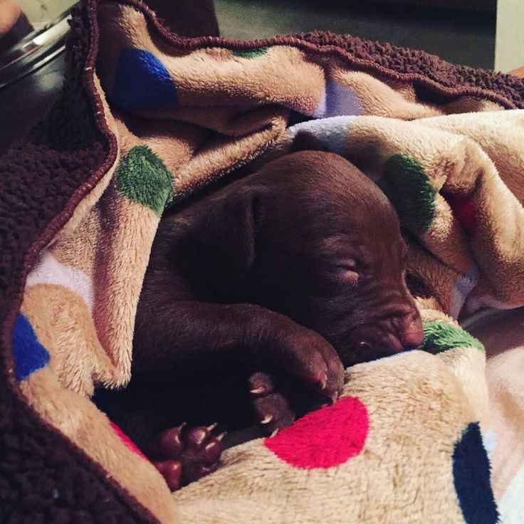 Nick and JoAnna Garcia Swisher Have Adopted a Super Cute Puppy #joanna #garcia #swisher #adopted #super #puppy