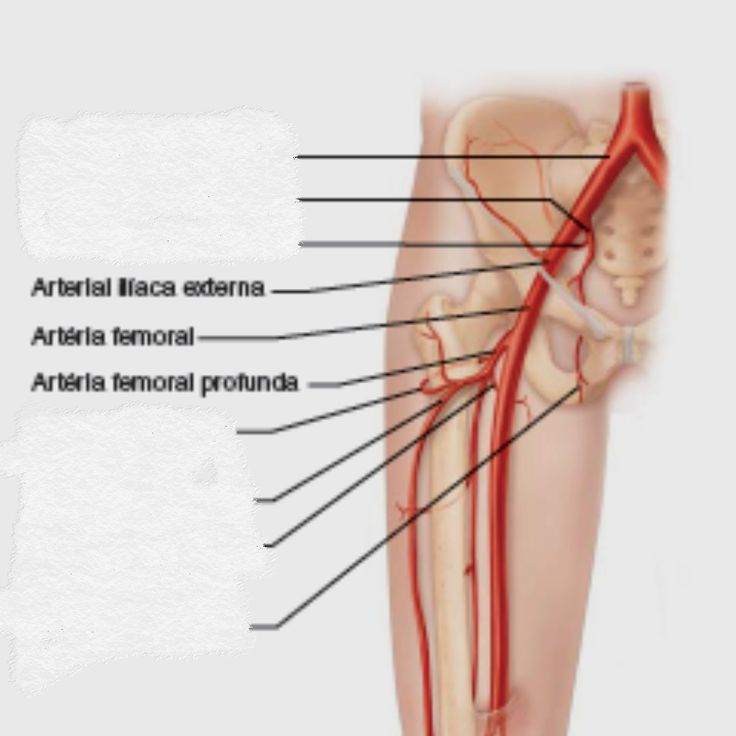 10 best anatomia 7 images on Pinterest | Classroom, Physical ...