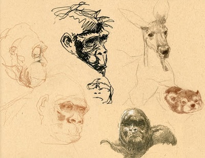 Zoo sketches. By Dugbuddy (from his wildlife sketchbook). Via www.bing.com