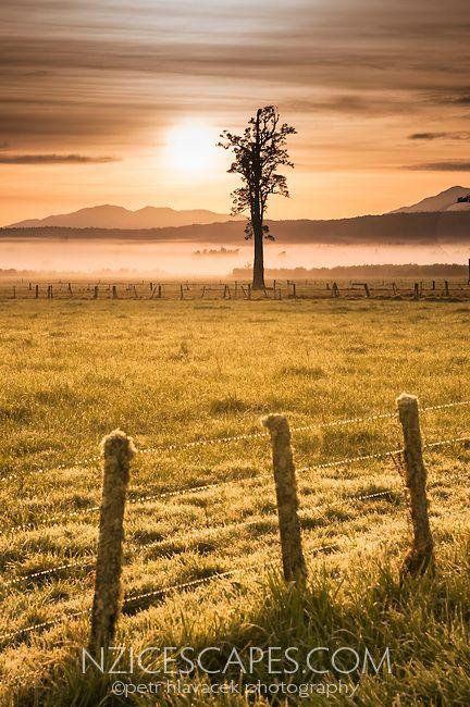Sunrise on farmland near Whataroa, South Westland, West Coast, New Zealand