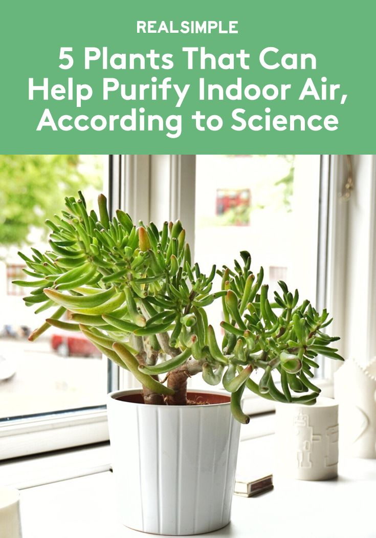 5 Plants That Can Help Purify Indoor Air, According to Science | New research shows these common house plants all absorb harmful chemicals.