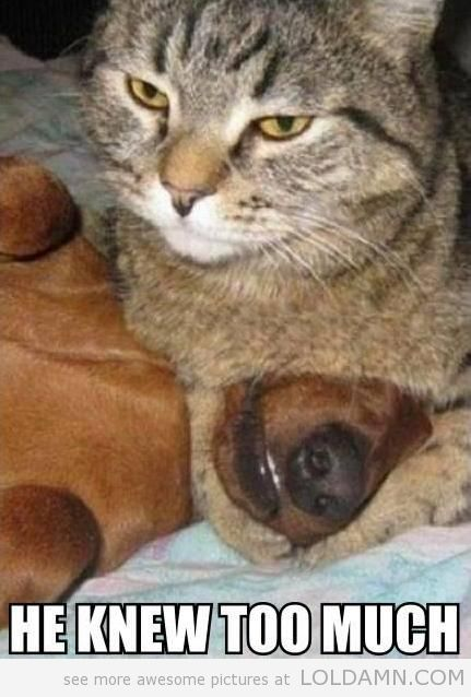 Funny Dogs | funny cat fights dog evil
