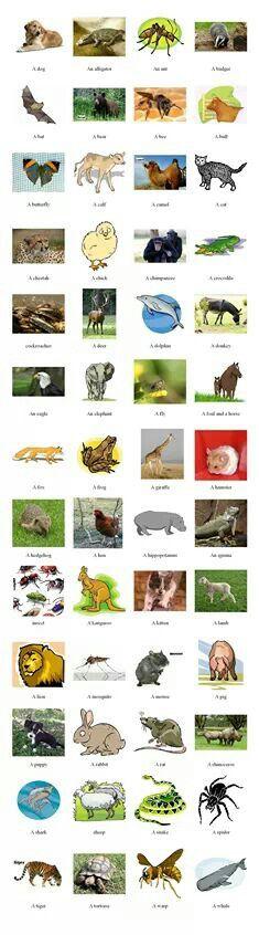 English vocabulary - Animals