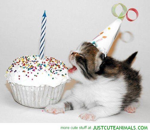Animal Eating Birthday Cake - http://drfriedlanderdvm.com/animal-eating-birthday-cake/