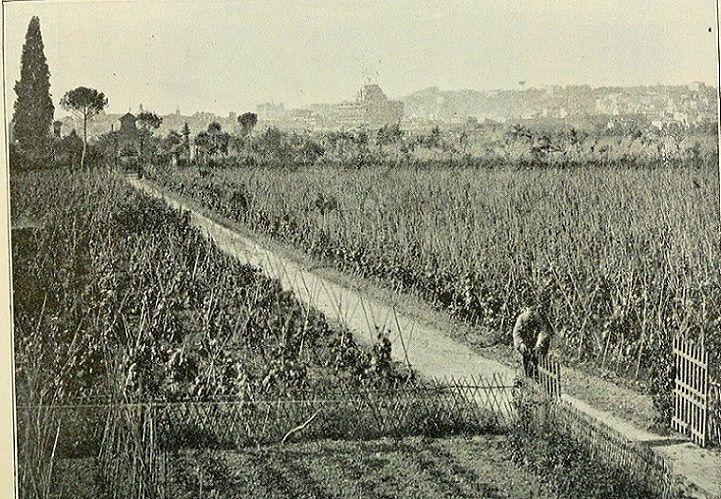 Foto storiche di Roma - Quartiere Prati Anno: 1870