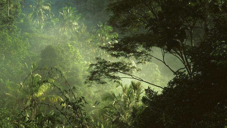 Tropical Indonesia Wallpaper