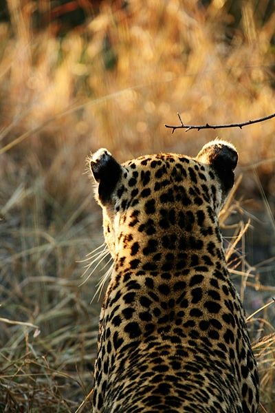 17 Best Images About Out Of Africa On Pinterest Africa