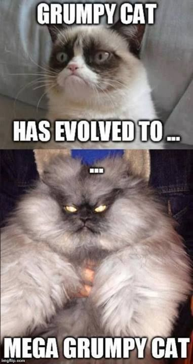 Grumpy cat funny, funny grumpy cat, grouchy quotes …For more hilarious humor and funny pics visit www.bestfunnyjokes4u.com