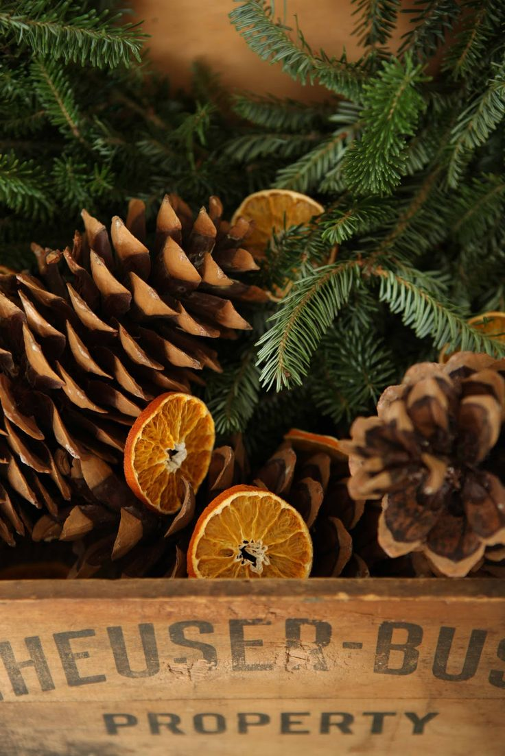 Drying Out Oranges Christmas Decorations 1000 Images About Christmas Oranges On Pinterest Christmas