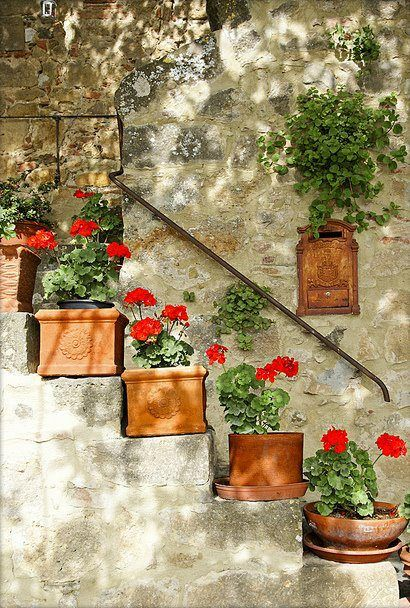 A few pots of geraniums makes all the difference doesn't it?. - possible for steps leading from oriental patio into med garden room