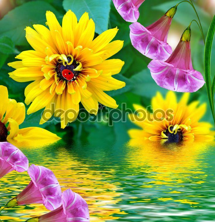 Летний пейзаж. Рудбекия цветы