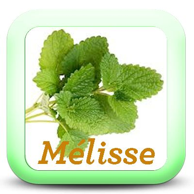 jecuisinemonpotager.fr wp-content uploads 2014 11 Icon-Melisse.png
