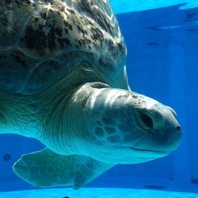 89 Best Images About Marine Life On Pinterest