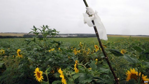 Sunflowers....MH17