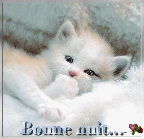 Bonne Nuit Adorable Chaton