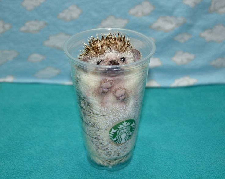 Looking for inspiration for a hedgehog name? Here is a list of ideas to peruse: Albert Einspine Alfred Hedgehog Aquilles Aurora Barb Barbara Quilliams Barbarella Bramble Briar Bristle Bruce Quilli…