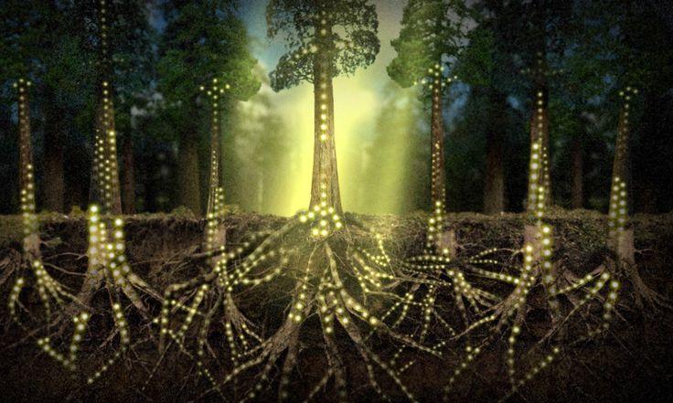 """As árvores não são """"robôs orgânicos"""" que apenas produzem oxigênio e madeira. Elas são capazes de escolher o que fazer, têm memórias e até diferentes personalidades. Também são capazes de fazer amizade e ajudar umas às outras. Quem diz é o alemão Peter Wohlleben, especialista em árvores e guarda-florestal com anos de experiência..."""