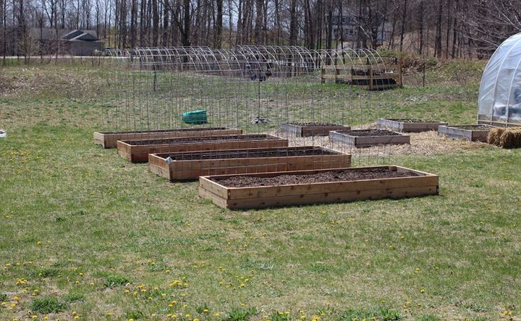 I added cattle panel trellises to my large raised garden beds to form long lasting, strong arches for growing all kinds of climbing plants.