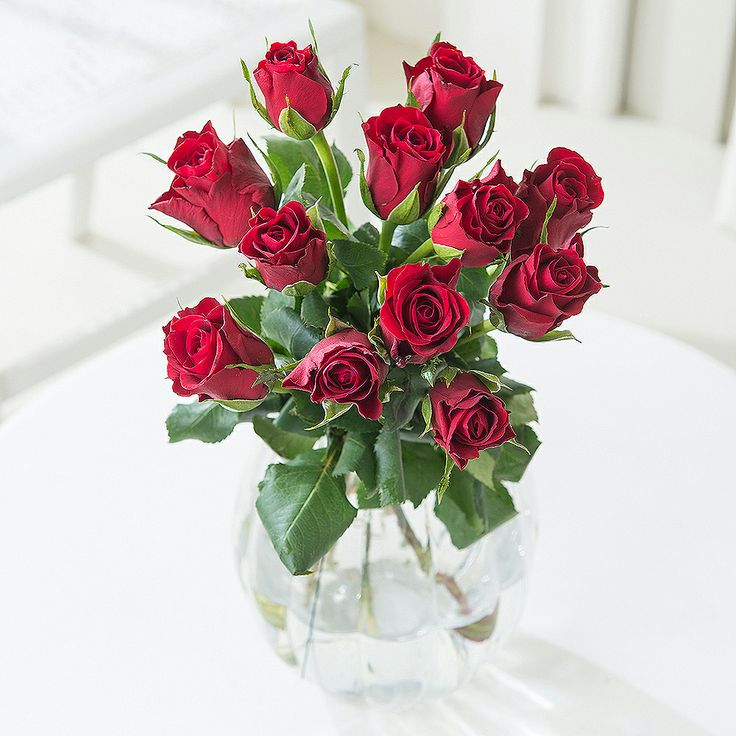 Romance 12 Red Roses