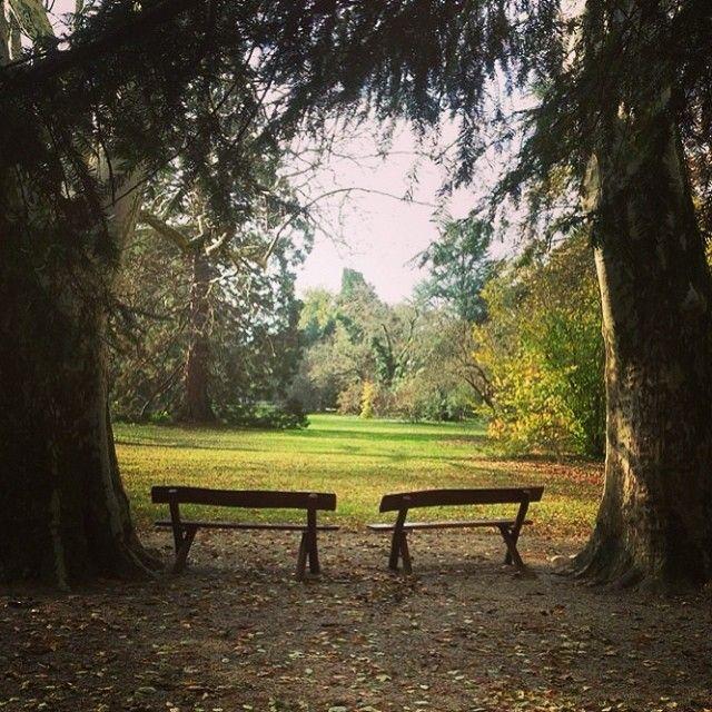 Szép időben nincs is jobb mint üldögélni egy picit a padokon a Sárvári Arborétumban. #nature #wellness #tree Sárvár