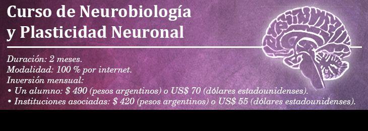 Mejores 7 imágenes de neuro en Pinterest | Anatomía humana, Cuerpo ...