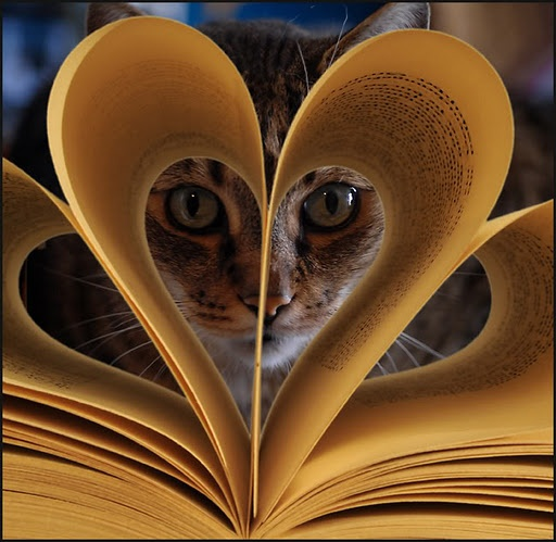 cat in book page shaped like a heart