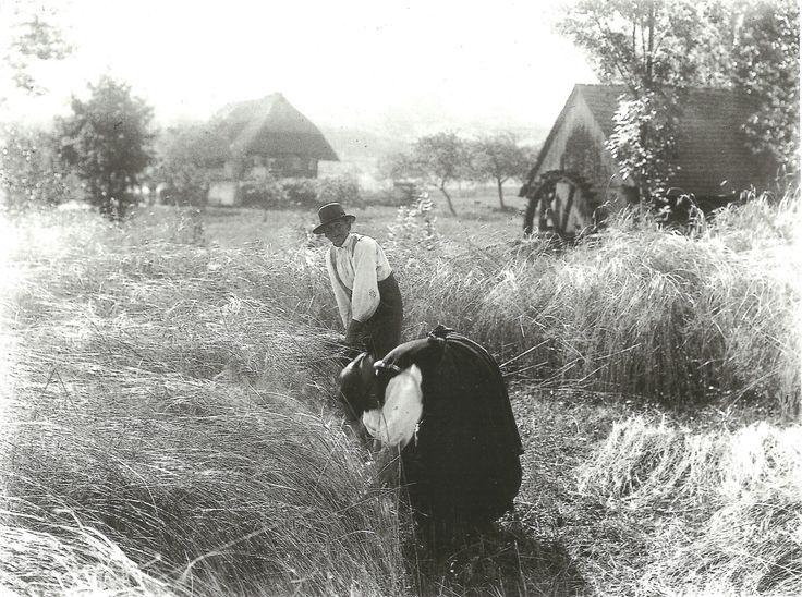 Harvesting, Black Forest (1894)