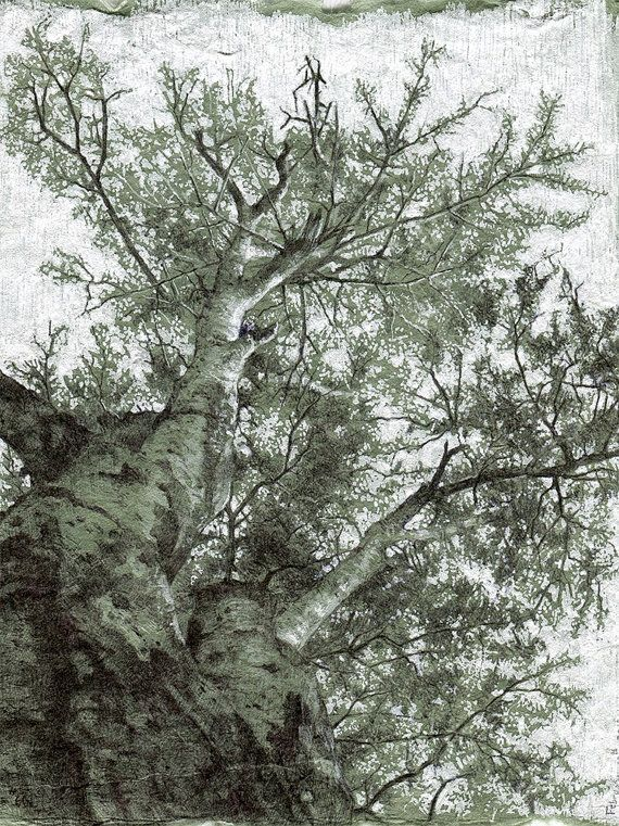 """Signed, limited edition print of drawing #66 from my """"Secret Life of Trees"""" project"""